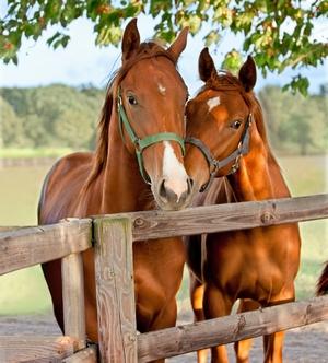 Equestrian Citrus County Florida